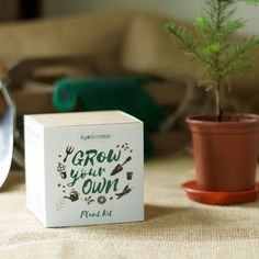 Aji Limon Hot Lemon Chilli Plant Growing Kit - Grow Your Own - Pots, Pellets, Markers, Pot Trays & Seeds - With DIY Instructions by Plants From Seed on Gourmly Golden Barrel Cactus, Alpine Strawberries, Chilli Plant, Sensitive Plant, Tea Plant, Plant Pots, Strawberry Planters, Plant Markers, Strawberries