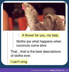 Sloths are alive coconuts