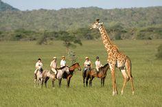 Kenya. Experience horse riding & mountain biking near Mount Kenya to witness #giraffes! #Africa #Kenya #Travel