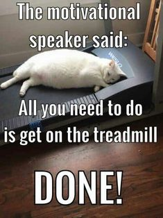 Most Hilarious White Cat Meme & Funny White Cat Images Funny Animal Memes, Cute Funny Animals, Funny Animal Pictures, Funny Photos, Funny Dogs, Funny Memes, Memes Humor, Humorous Animals, Funny Cute Cats