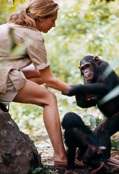 Jane Goodall, and chimps