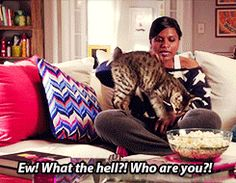 Mindy and the random cat that wandered into her apartment-catherine! Movies Showing, Movies And Tv Shows, My Favorite Part, Favorite Tv Shows, American Curl, Witty Remarks, The Mindy Project, Mindy Kaling, Episode Online