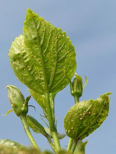 Stop Aphids in Your Garden Don't let aphids ruin your garden. Use these tips to keep your plants safe.