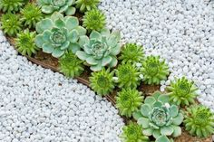 7 Ways to Create a Luscious Drought-Tolerant Garden | DoItYourself.com