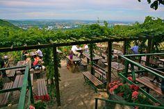 Nussdorf Heiligenstadt Sirbu (c) STADTBEKANNT Heart Of Europe, Vienna Austria, Homeland, Garden Bridge, Vineyard, Outdoor Structures, City, Water, Travel