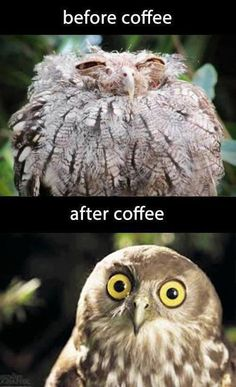before and after coffee...Excellent! J'ai le même à la maison: la même tronche après minimum 6 cafés avant que les orbites bien en face des trous!