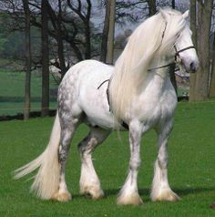 I wonder what kind of horse this is…not a Fresian since it's white unless there's a genetic mutation making it white? Anyone know?