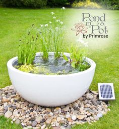 160 GBP What's in the box?  	Pond in a Pot Kit   		White gloss finished fibreglass low planter - 34cm Height (1ft 1in) x 72cm (2ft 4ins) Diameter 	 		Grow Through Metal Ring - 63½cm (25ins) 	 		Selection of six especially chosen Semi Shade thriving plants (see below for details) 	 		So