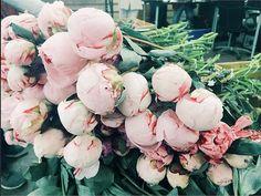 pale pink peonies.