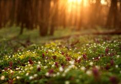 Into the night ~ Flowering green forest on sunset , spring nature background stock photo