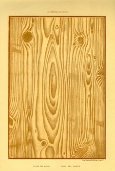 Illustration of tree wood grain, via Agence Eureka Paper Toys, Paper Crafts, Backgrounds Wallpapers, Drawing, Wood Texture, Copics, Printable Paper, Book Of Shadows, Paper Background