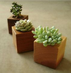 Square modern wood succulent planters in choice of naturally occurring tones of western red cedar. Our reclaimed wood succulent #planters are a good way to brighten up just about any office. #Succulents are easy to care for, and come in many unique shapes and colors.