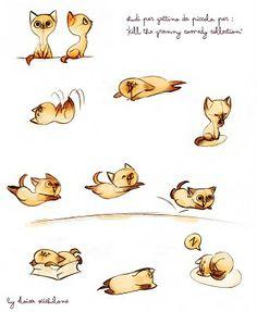 studi per gattino!!!