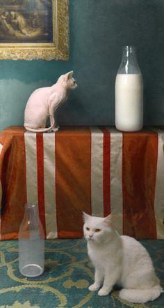 fat cat thin cat