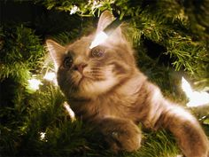 On the First Day of Christmas, My True Love Gave to Me | Feline Docs