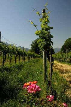 Seen with www.wine-tours.ch