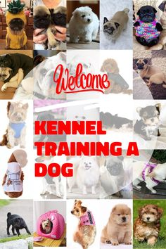 Kennel training is useful with youthful dogs and also older puppies with stress and anxiety issues. The greatest goal regarding crate exercising is trying to keep your dog away from harms approach. Kennel Training A Dog, Crate Training, Dog Training Tips, Stress And Anxiety, Have Fun, Dogs, Easy, Image, Pet Dogs