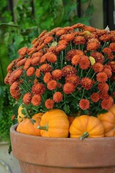 Fall Containers, Fall Planters, Autumn Decorating, Porch Decorating, Thanksgiving Decorations, Fall Decorations, Fall Home Decor, Fall Flowers, Fall Harvest