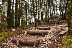 M   o    m    e    n    t    s    b    o    o    k    .    c    o    m: Προς Κέντρο Περιβαλλοντικής Εκπαίδευσης... Αίνος, ... Firewood, Nature, Plants, Woodburning, Naturaleza, Plant, Nature Illustration, Off Grid, Planets