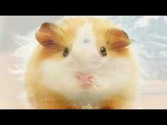 Rodents, Animals, Animales, Animaux, Animal, Animais