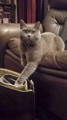 Don John  Cat | Pawshake