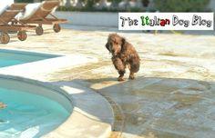 La nostra estate su www.theitaliandogblog.com