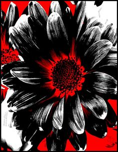 Red White And Black Daisy Photograph - Abstract Red White And Black ...