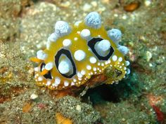 Sea Creature!