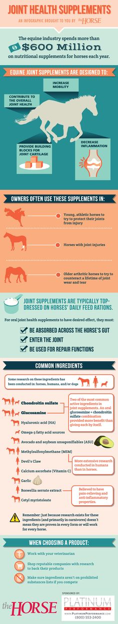 [INFOGRAPHIC] Equine Joint Health Supplements - TheHorse.com | Learn about equine joint supplements and what might help your horse in our easy-to-follow visual guide. Brought to you by  http://www.xnaergo.com