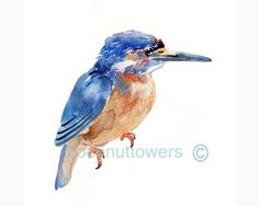 Kingfisher   - Animal Painting - Size 8x10 in - Original  Watercolor  Art- Nursery Art Print