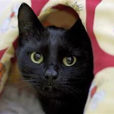 Milo - Cat Rehoming & Adoption - Wood Green Animals Charity