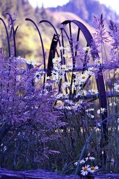 All that is lilac, violet, purple, mauve, magenta. Join to Purple world community and share your favourite pictures wtih us. Lavender Cottage, Lavender Blue, Lavender Fields, Lavender Flowers, Purple Flowers, Wild Flowers, Lavander, Lilac, Spring Flowers