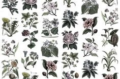 The Fruit & Flora wallpaper shows a wide variety of floral drawings on your wall. Here we have made our own selection in a graphic color style. Floral Drawing, Custom Wall, Flower Wallpaper, Wall Murals, Walls, Rebel, Fruit, Drawings, Prints