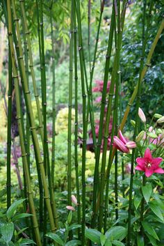 I will have a bamboo/ japanese garden someday.