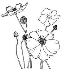 poppy of klaproos knutselen peuters kleuters