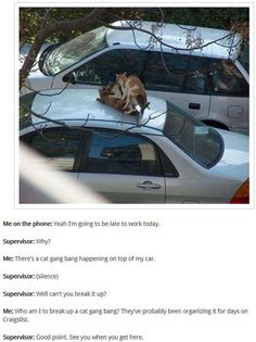 I'll be late for work. There's a cat gang bang on my car. (I don't laugh out loud often but this made me snicker)