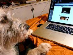 Mischling Wenzel  Schnell noch mal schauen, was meine vierbeinigen Freunde bei Facebook so treiben         Mehr lesen: http://d2l.in/7v  dogs2love - Gassi gehen zum Verlieben. Partnerbörse für alle, die Hunde lieben.  Bild, Dating, Foto, Hund, Single