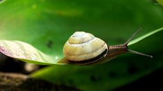 Snail Wallpapers Snail Live Images HD Wallpapers SHXimaI Graphics