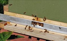Do you need a beehive entrance reducer and how is it used Honey Bee Hives, Honey Bees, Raw Honey, Beekeeping For Beginners, Beekeeping Equipment, Small Entrance, Raising Bees, Bee Farm, Places In Europe