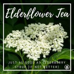 The thyme herb tea benefits have been known for ages. Drinking this magical tea may provide relief for many ailments. Make the switch from coffee! Flu Remedies, Herbal Remedies, Natural Health Remedies, Natural Cures, Thyme Tea Benefits, Thyme Herb, Elderberry Syrup, Salud Natural, Elderflower