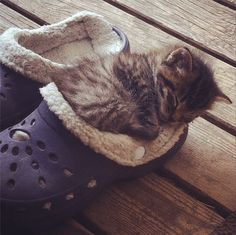 the only acceptable use of a croc
