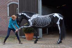 Movement therapist teaches the students of the Elite programme. @Moravita ISHAS Elite Equestrian Education