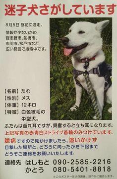 里親さんブログ本日休業 迷子さんのお知らせと写真のみ - http://iyaiya.jp/cat/archives/80692