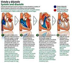 http://ambulanciasyemerg.blogspot.com/2014/11/sistole-diastole.html