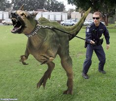 Puppy Training Little Rex Dog Dinosaur Fantasy Creatures, Mythical Creatures, Funny Animal Memes, Funny Animals, Photoshopped Animals, Animal Mashups, Dinosaur Pictures, Montage Photo, Chistes