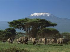 Mount Kilamanjaro. I hope the elephants will still be around . They are being decimated because of high Asian demand for their tusks. Let's protect them. http://www.npr.org/2012/10/25/163629043/in-a-tanzanian-village-elephant-poachers-thrive
