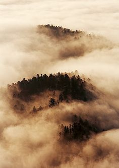 Morning fog... by sm-photography, via Flickr