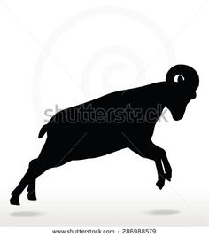 Vector Image - big horn sheep  silhouette in attacking  pose isolated on white background - stock vector
