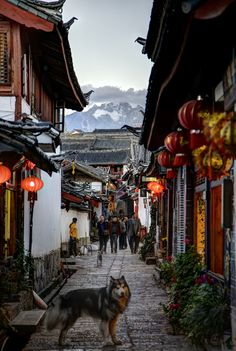 On the ancient Tea Horse Trail, the UNESCO listed town of Lijiang, Yunnan, China #NomadsSecrets