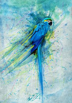 Digital painting of a Macaw - Blue Harmonic on Behance